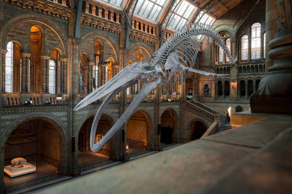 museo di storia naturale, la city