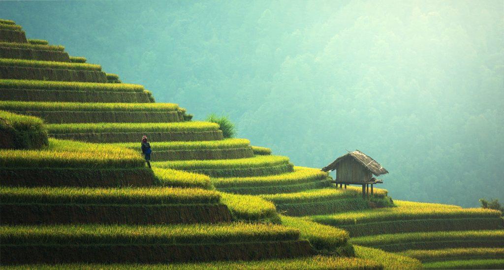 Bali giardino terrazzato risaie