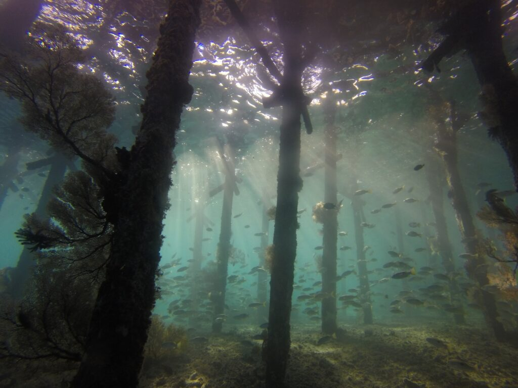 Kalimantan immersione subacquea